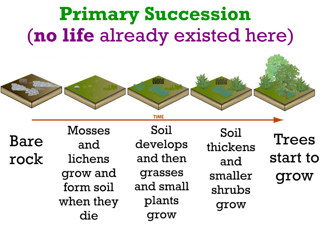 Uncategorized Ecological Succession Worksheet Answers succession ecology project example